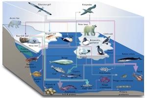 marine_ecosystems