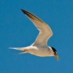californialeasttern_flickrcommons_USFWS-Pacific-Southwest-Region