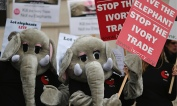 Anti-ivory trade demonstartion, London 13 February