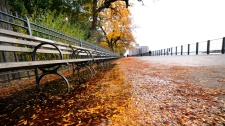 fall-leaves-laptop-city-park-bench-1027064